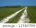 白い道 11583709