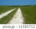 白い道 11583712