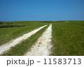 白い道 11583713