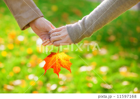 Male and female hands holding a red maple leaf 11597168