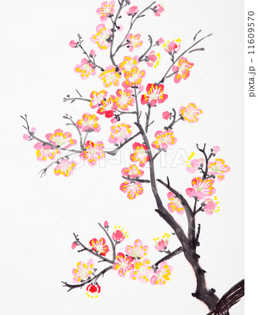 Chinese painting of flowers, plum blossom 11609570