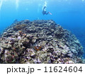 スキューバダイビング ダイバー ダイビングの写真 11624604