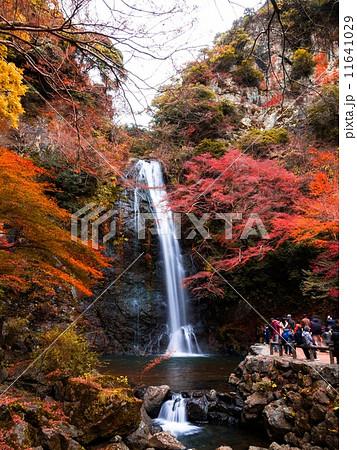 箕面大滝 11641029