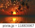 太陽 日 トロピカルの写真 11663067