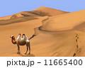 砂漠とフタコブラクダ 11665400