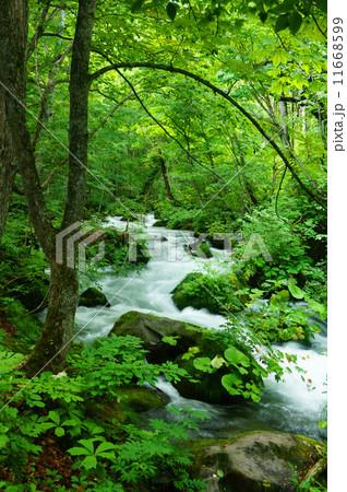 奥入瀬渓流 11668599