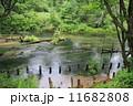 清流 湯川 自然の写真 11682808
