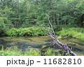 清流 湯川 自然の写真 11682810