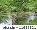 清流 湯川 川の写真 11682821