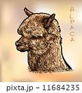 動物 アルパカ ベクトルのイラスト 11684235