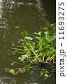 ウォーター 水 水分の写真 11693275