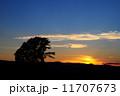 シルエット 夕日 大木の写真 11707673