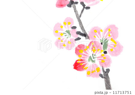 Chinese painting of flowers, plum blossom 11713751