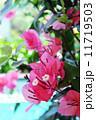 南国の花 11719503