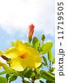 黄色い花 11719505