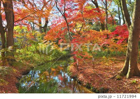 錦秋の下鴨神社 11721994