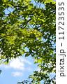 小諸城 緑 新緑の写真 11723535