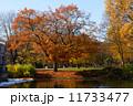 秋 木 ウォーターの写真 11733477