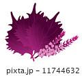大葉 赤紫蘇 紫蘇の葉のイラスト 11744632