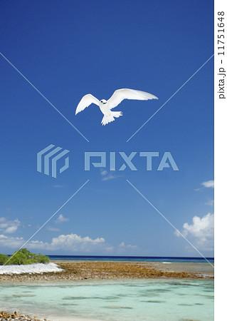南国の鳥 68 11751648
