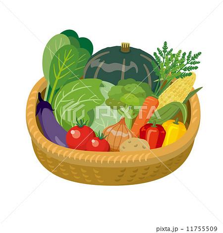 野菜盛り【食材・シリーズ】 11755509