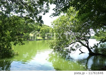山田池公園 11761646