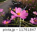 秋桜越しのオートバイ 11761847