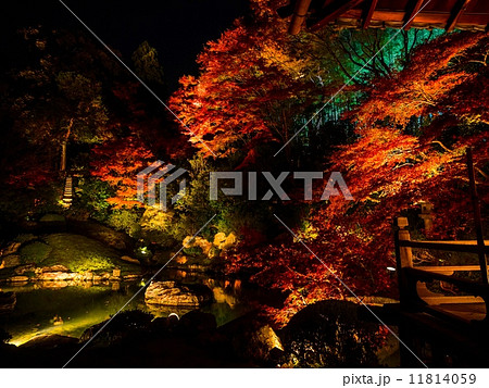 秋の青蓮院ライトアップ 11814059