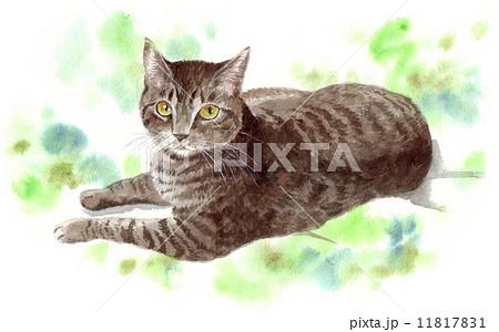 キジトラ猫 11817831