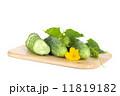 きゅうり キュウリ 胡瓜の写真 11819182