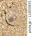 くらげ ミズクラゲ 水海月の写真 11850835