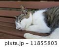 のら猫 昼寝 猫の写真 11855803