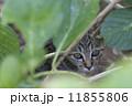 野良猫 猫 ねこの写真 11855806