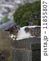 野良猫 猫 ねこの写真 11855807