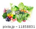 食材 野菜 11858831