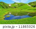 湿原 夏山 鳥海山の写真 11865026