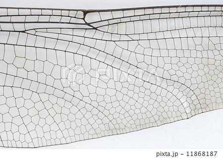 オニヤンマの羽模様 11868187