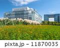 パンパスグラス コスモス 満開の写真 11870035