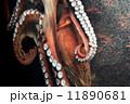 蛸 11890681