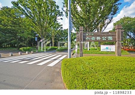 小金井公園 11898233