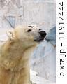 熊 シロクマ ホッキョクグマの写真 11912444