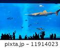 美ら海水族館 ジンベイザメ ジンベエザメの写真 11914023