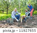 じゃがいも ジャガイモ ガーデンの写真 11927655