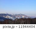 志賀高原 白樺 シラカバ林の写真 11944404