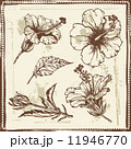 Hand drawn sketch of  hibiscus flowers 11946770