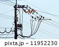 無停電工法 電線 電信柱の写真 11952230