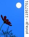 コスモス 月 花の写真 11957701
