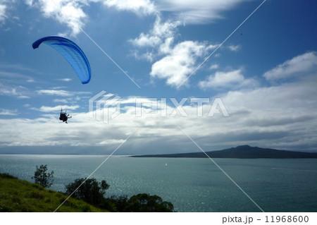 大自然 ニュージーランド Newzealand RangitotoIsland   11968600
