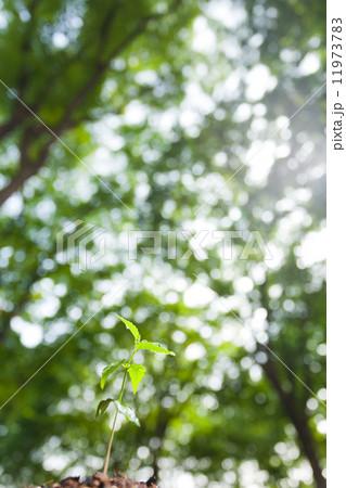森の中の芽生え 11973783