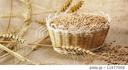 harvest wheatの写真素材 [11977006] - PIXTA